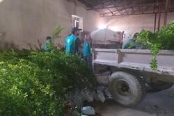 توزیع ۱۰هزار درخت بین خانوارهای روستایی شهرستان لنده انجام شد