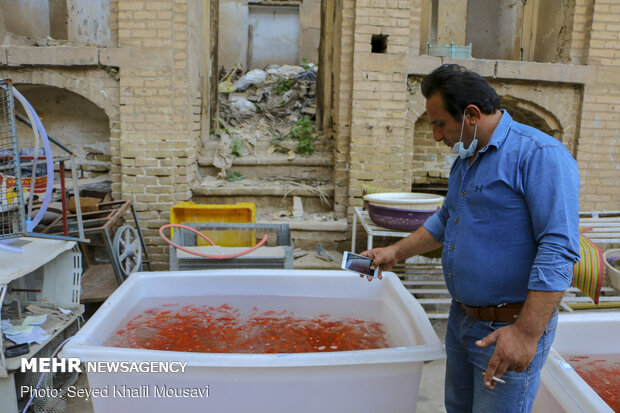 Sale of goldfish for Haftseen in Ahvaz