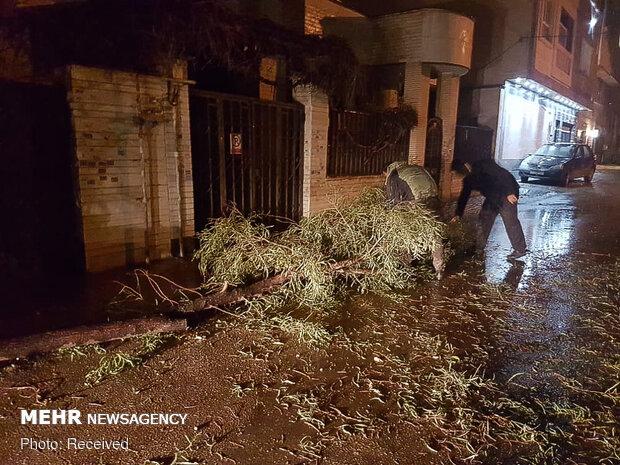 خسارات وزش باد شدید در شیراز