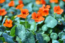 اهالي مدينة اصفهان يقبلون على شراء الزهور و النباتات بحلول العام الجديد / صور