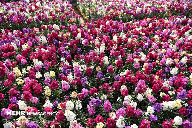 بازار گل در آستانه بهار-اصفهان
