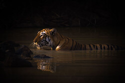 برندگان رقابت جهانی عکاسی از طبیعت  ۲۰۲۰