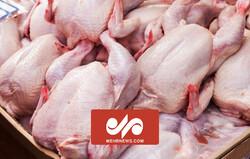 مشکل گرانی مرغ از کجاست؟