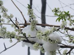 پدیده تغییر اقلیم در مازندران/ ضرورت غرس درختان بوم سازگار