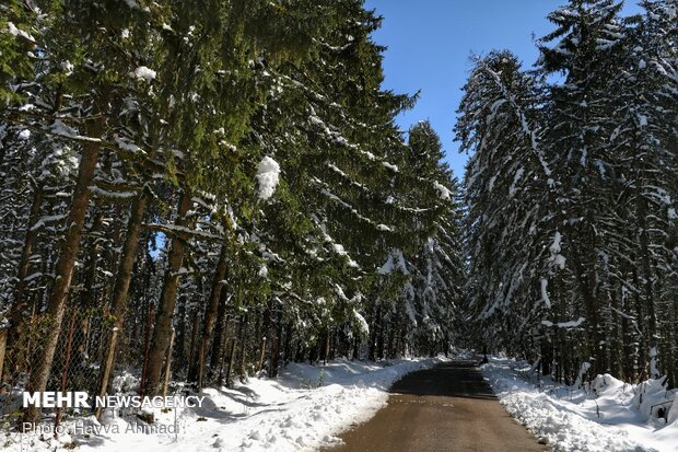 Lajim Forest in N Iran covered with snow