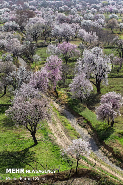 Spring brings beauty to gardens of Qazvin