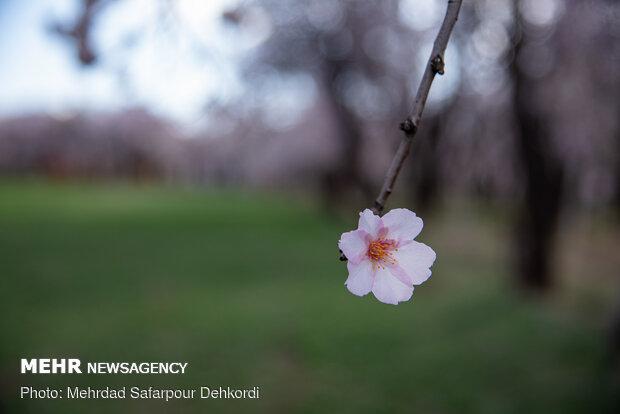 شکوفه های ۱۴۰۰