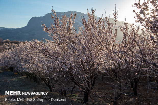 Breathtaking scenery of spring in Shahr-e Kord