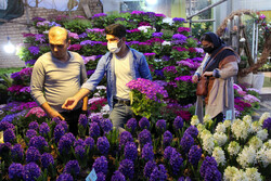 بازار داغ گل و ماهی در گرگان