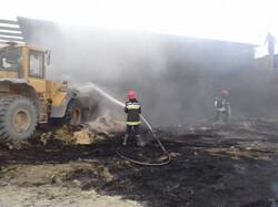 آتشسوزی نیزارهای شهر چمران مهار شد
