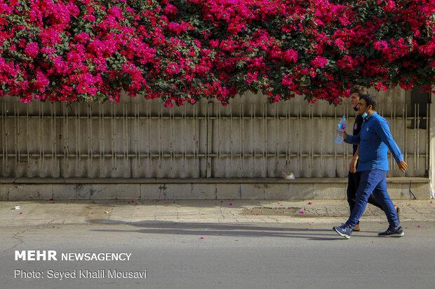 اهواز در محاصره گل های کاغذی
