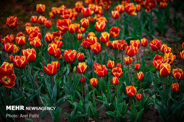 جشنواره گل پاک چمران کرج
