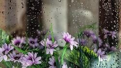 ورود موج جدید بارش ها به کشور از عصر امروز/ تهران امشب بارانی خواهد بود