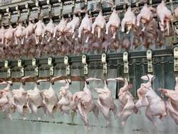 توزیع۳۷۰تن مرغ منجمد در کهگیلویه وبویراحمد/ مرغ گرم وارد بازار شد