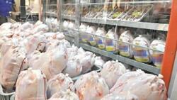 ۴۵۲ تن مرغ گرم در قزوین توزیع شده است