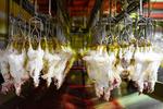 نگرانی برای تامین گوشت مرغ مورد نیاز ماه مبارک رمضان وجود ندارد