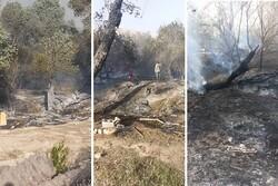 قصه تکراری در نوروز هر سال؛ جنگل گلوبردکان دچار آتشسوزی شد