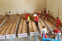 طرح خشکسالی در استان بوشهر اجرا شد/ توزیع ۱۰۰۰ بسته معیشتی