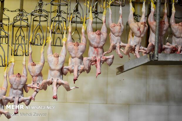 توزیع بیش از ۱۶۰۰ تن گوشت مرغ در ایام تعطیلات عید نوروز در اردبیل