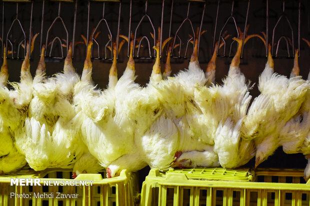 افزایش ۱۰.۵ درصدی عرضه گوشت مرغ و طیور در بهار ۱۴۰۰