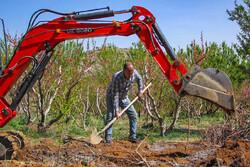 بهار پر تلاش باغداران سامانی