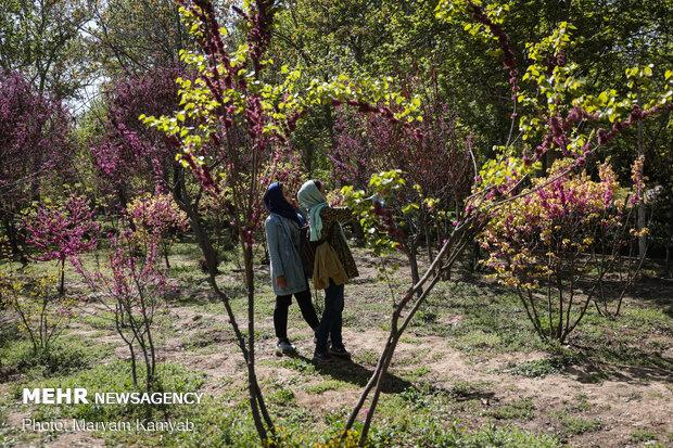 شکوفه های بهاری