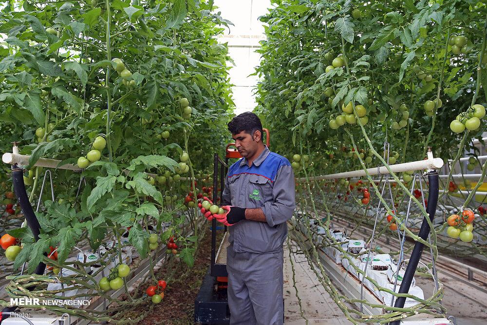 انتظارات اقتصادی استان سمنان از رئیسی/ زنجیره تولید تکمیل شود