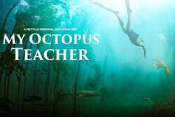 روایت اخت شدن با «اختاپوس»/ مستندسازی که به اقیانوس پناه برد