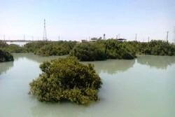 مساحت جنگلهای مانگرو در بندر ماهشهر به ۶۵۰ هکتار رسید