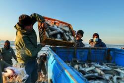 کشف یک تن و ۲۰۰ کیلوگرم ماهی قاچاق در پلدشت