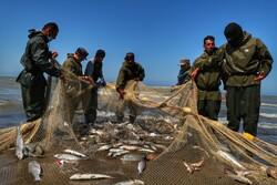 صید ماهیان استخوانی در گلستان ۲۳ درصد افزایش یافت