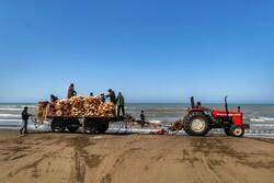 آخرین روزهای صید و صیادی در جویبار