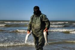 افزایش ۹ درصدی صید ماهیان استخوانی از دریای خزر