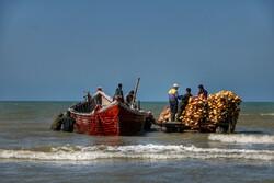 آغاز فصل صید ماهیان استخوانی در سواحل گیلان