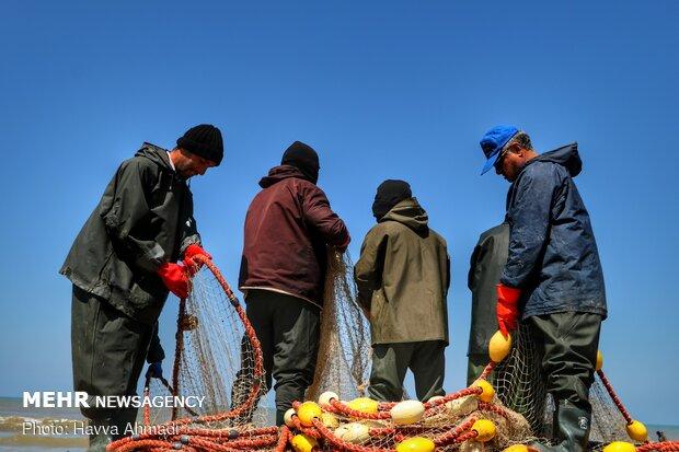صید ماهی شوریده در صیدگاههای خوزستان و بوشهر آزاد شد
