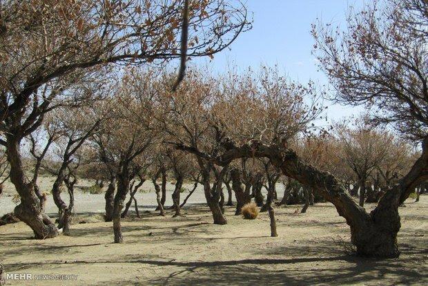 جلوگیری از تخریب منابع ملی توسط سودجویان در کرمانشاه