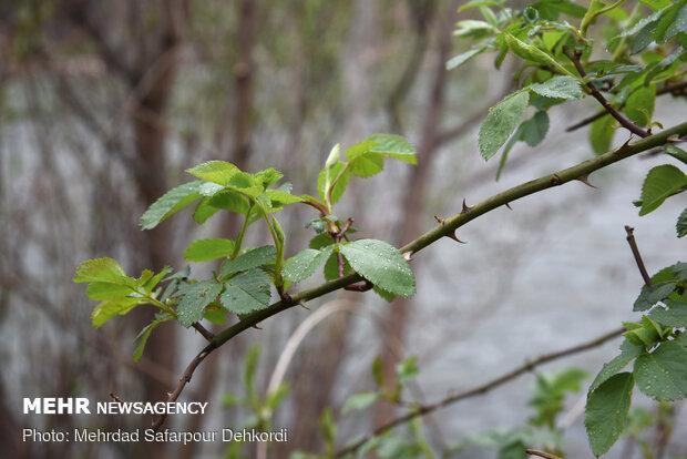 طبیعت تنها در 13 فروردین