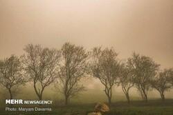 نفوذ گرد و غبار از عراق و کویت به بوشهر/ کیفیت هوا کاهش مییابد