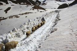 رهایی «عسل کشان» از برف