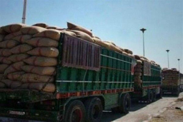 الاحتلال الأمريكي يواصل سرقة قمح السوريين من الحسكة وتهريبها عبر العراق