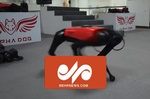 VIDEO: Chinese tech company develops robot dog
