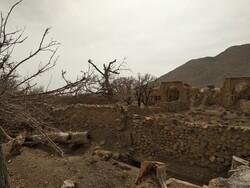 ۳۰۰۰ اصله درخت با فعالیت معدنی در شرق اصفهان خشک شد