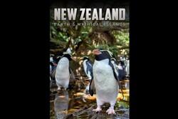 شگفتیهای «نیوزلند جزایر افسانهای» در قاب تصویر