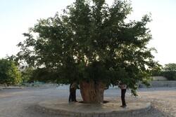 مراتب ثبت ملی ۱۳ اثر طبیعی به استاندار فارس ابلاغ شد