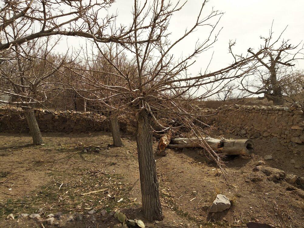 گلستانی که با یک معدن خزان شد/خشک شدن ۳ هزار درخت در روستایی در نایین