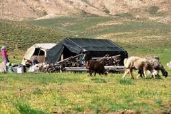 تولید سالانه ۲۷هزار تن شیر و فراورده های لبنی توسط عشایر کرمانشاه