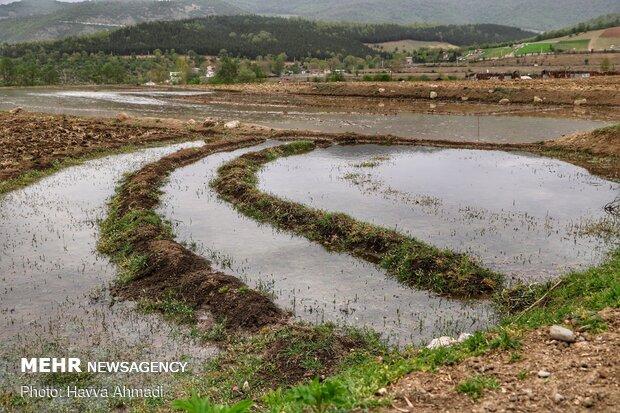 آب گیری زمین کشاورزی