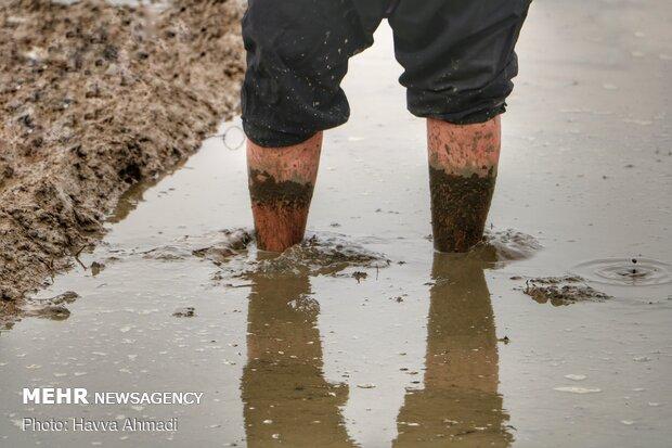 کشاورزان ساعتها با پاهای برهنه در آب هستند و بخاطر این موضوع در سنین بالا به دردهای کمر و پا دچار هستند.