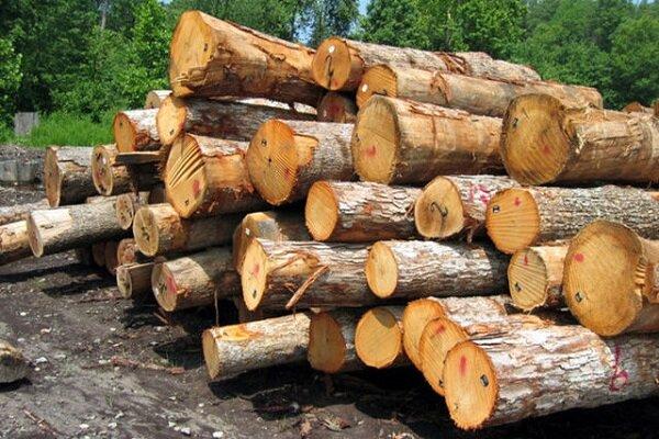 یک تن چوب جنگلی قاچاق در بروجن کشف شد