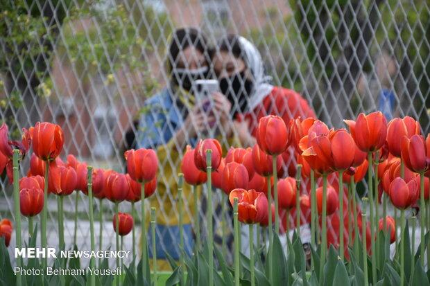 جشنواره گل لاله اراک